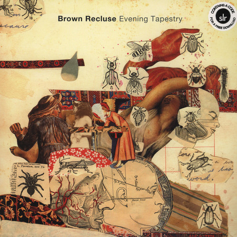 Brown Recluse - Evening Tapestry