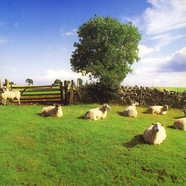 KLF - Chill Out