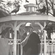 Eddy Detroit - Black Crow Gazebo