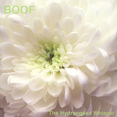 Boof - The Hydrangeas Whisper
